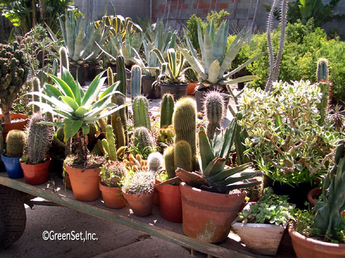 Assorted Cacti in - Close-Up