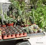 Assorted Cacti - Right View