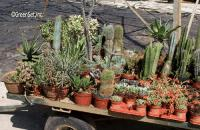 Assorted Cacti - Left View