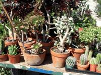 Assorted Cacti - Close-Up