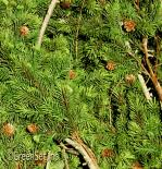 Artificial Green Pine Foliage