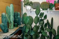 Assorted Plastic Cactus