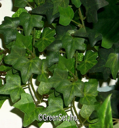 Silk English Ivy Vine