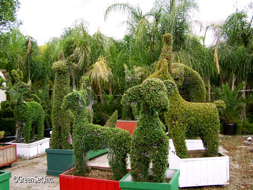Topiary Assorted